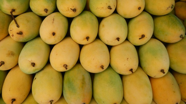 Mangoes can do wonders for diabetics