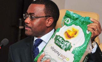 Nigeria to become Africa's largest rice exporter 'in 5 years'