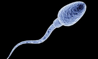 Sperm can carry Ebola for 3 months, says WHO