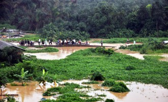 Flood destroys 120 houses, farms in Jigawa