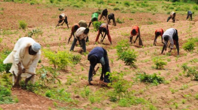Ebonyi to partner with 50,000 farmers 'to eradicate hunger'