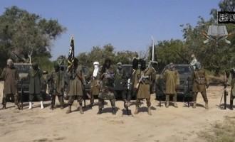 Boko Haram members 'tired of fighting'