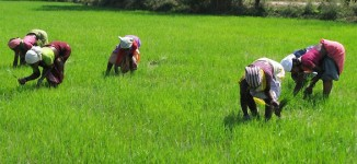 78,500 Kebbi farmers repay N1bn CBN loan