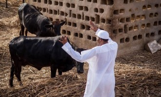 POLL: Should Buhari give Fulani herdsmen the IPOB treatment?