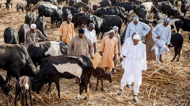 Mud houses, 5 horses, 270 cattle and N30m in the bank… Buhari's assets revealed