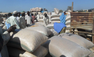FAO: Nigeria's cereal output increases 'in spite of Boko Haram'