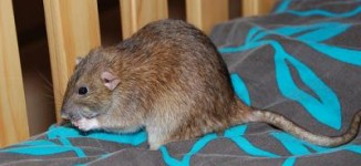 'Doctor, nurse infected' as Lassa fever kills one in Nasarawa