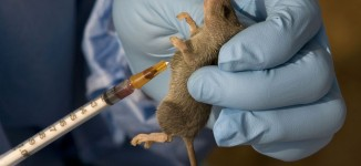 WHO deploys 826 personnel to contain Lassa fever in Nigeria