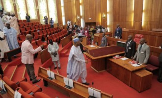 MURIC: Senate won't confirm Magu because it has skeletons in its cupboard