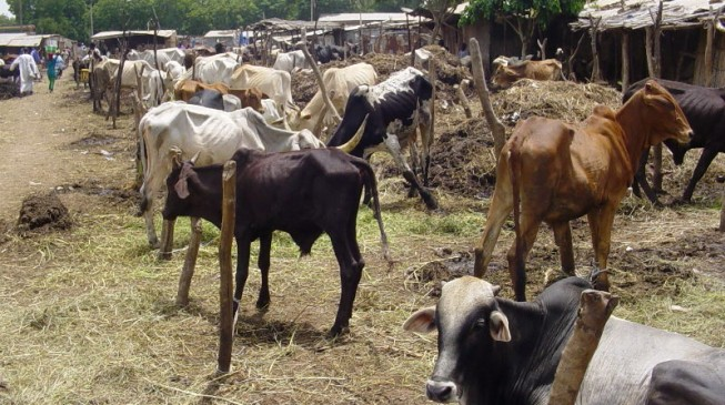 Cattle colonies will start next week, says FG
