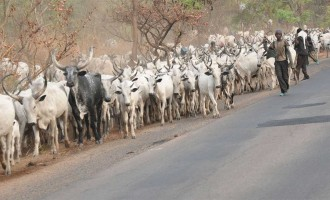 Herdsmen appeal for grazing land in Cross River