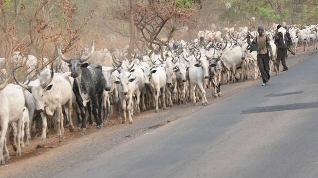 '25 killed' in fresh 'herdsmen' attack in Taraba