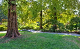 Mother Earth Day: Six ways trees combat climate change