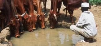 Ortom: Other states may have land for cattle colonies — NOT Benue