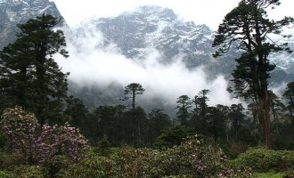 Biodiversity conservation is key to green growth, says UNEP