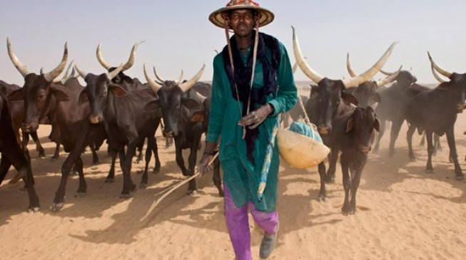 Umahi asks traditional rulers to compile data on herdsmen