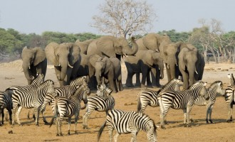 Drought forces Zimbabwe to put wild animals on sale