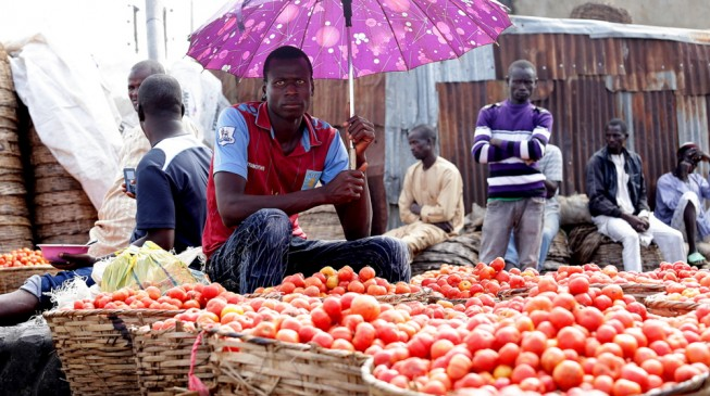 HURRAY! Tomato price crashes from N25,000 to N800 per basket