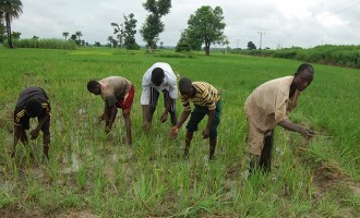 Presidency: Farmers to get four million bags of fertiliser before end of 2017