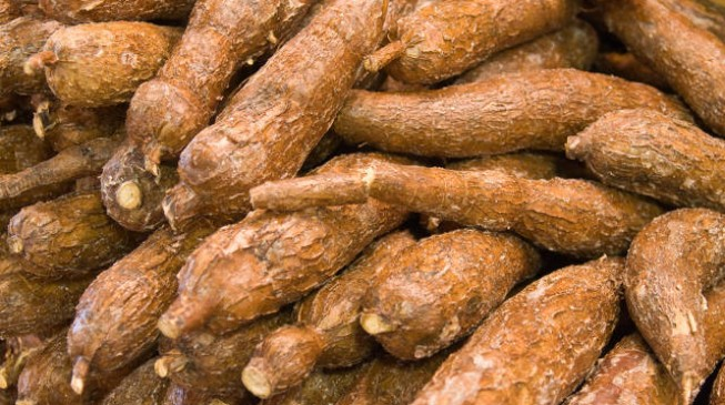 Cassava revolution 'can solve' Nigeria's economic crisis