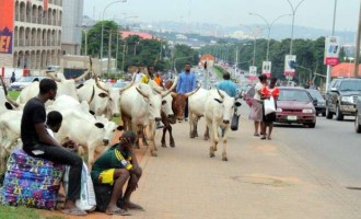 From Ghana to Ivory Coast: How herdsmen have been wreaking havoc across Africa