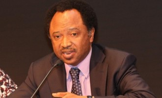 Shehu Sani: IDPs got N2m for food but PINE spent N50m on conferences