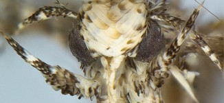 Newly discovered moth named after Donald Trump