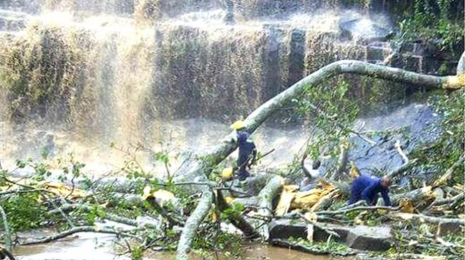 Tree crushes 18 to death at Ghana waterfall