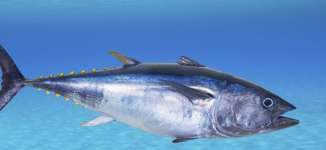 'High mercury content': Doctor warns against consumption of tuna, whale