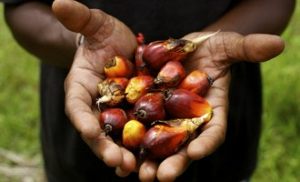 Okomu Oil Palm: Expect the biggest profit in five years