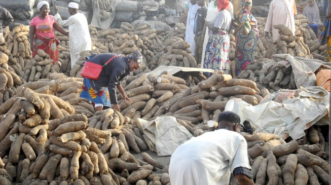 Can yams become a prolific forex yielding commodity for Nigeria?