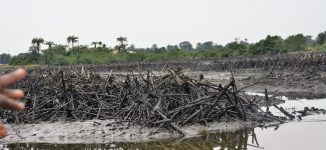 There's no going back on Ogoni clean-up, says minister