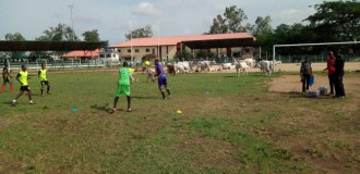 Dear FCT minister, as cows take over football field in Abuja…