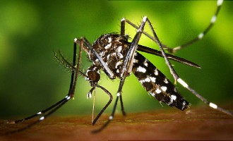 Zika virus 'may possess' potential cure for brain cancer