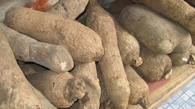 US rejects Nigeria's yam over 'poor quality'