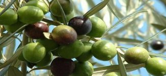 Eat Me: Six reasons olives are good for you