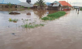 Agricultural agency offers support to farmers affected by flood