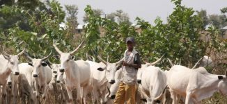 Fulani herdsmen and the logic of false consensus
