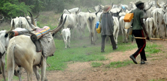 Benue: Of cattle colonies, ranching and grazing routes