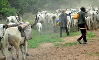 Tackling insecurity and spectre of killer herdsmen in the north-central