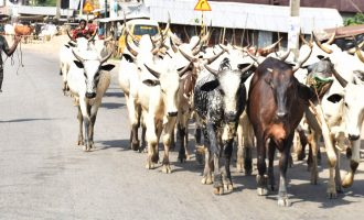 Oyo APC gov aspirant says ranching is solution to farmers, herdsmen clashes