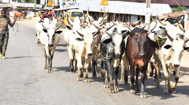Ortom Replies Lalong, I Won't Repeal Anti-Grazing Law