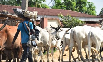 'Herdsmen' in gun battle with soldiers in Benue