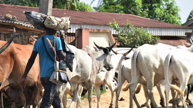 Edo to commence biometric capture of resident herders