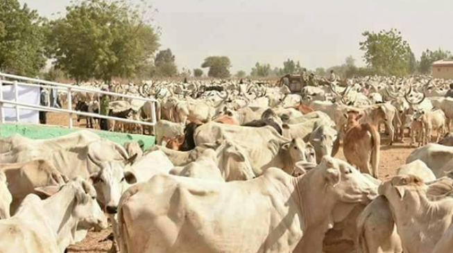 Herdsmen killings: How Nigeria can move from chaos to community