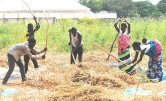 Daura farmers 'get N412m worth of assistance' from CBN