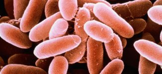 WHO warns Nigeria of deadly listeriosis outbreak