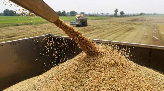 Thailand 'blames Buhari' for collapse of its rice mills