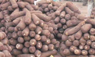 Researcher: Nigeria losing N10bn to post-harvest losses
